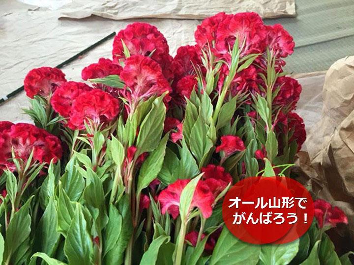 20150808花束3