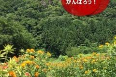 umetsu_ganbappe35_benibana