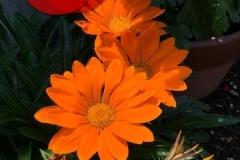 umetsu_ganbappe37_flower