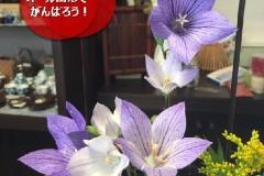 umetsu_ganbappe48_violet