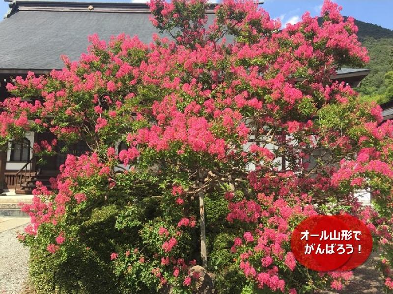 umetsu_101_garden