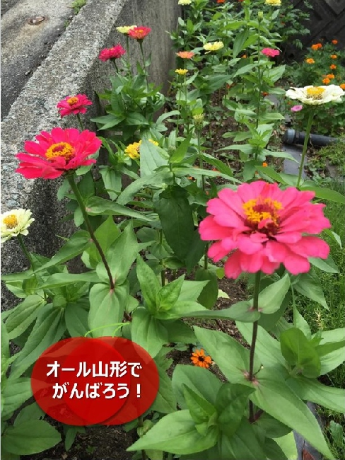 umetsu_108_flower