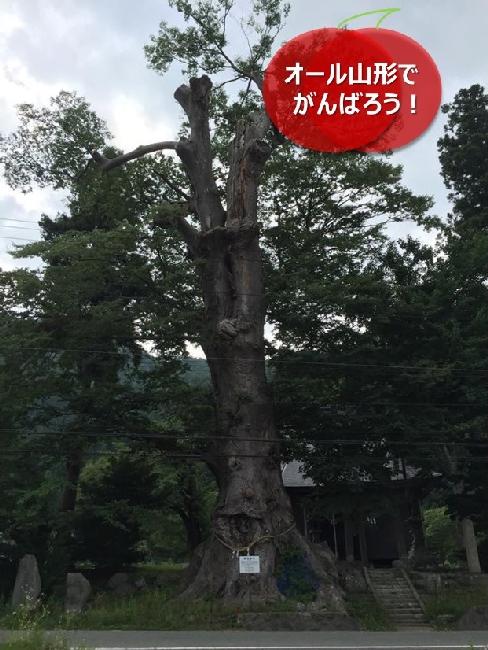 umetsu_111_tree