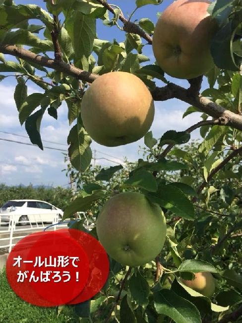 umetsu_ganbappe083_apple