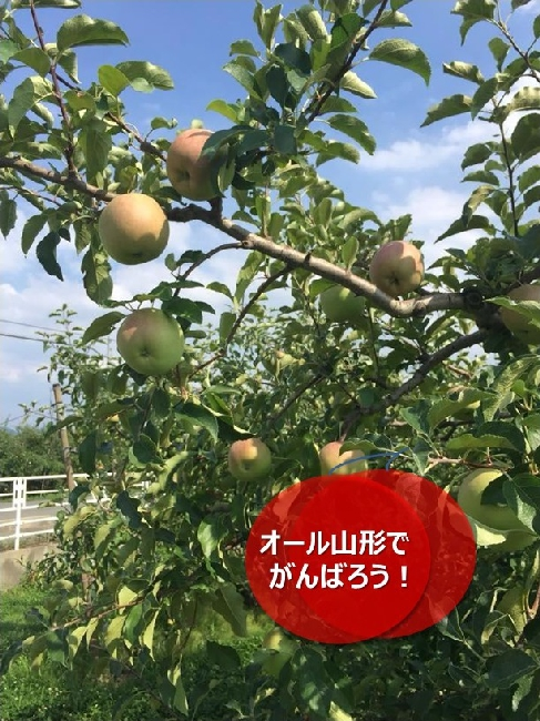 umetsu_ganbappe098_apple