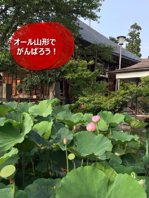 umetsu_ganbappe100_lotus