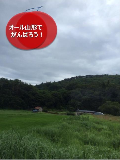 umetsu_ganbappe105_tanbo