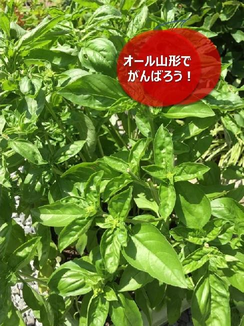 umetsu_ganbappe34_green